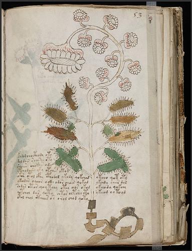 Voynich Manuscript Folio 53 by MindtoEye