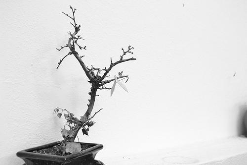 bonsai by Hugo Sousa
